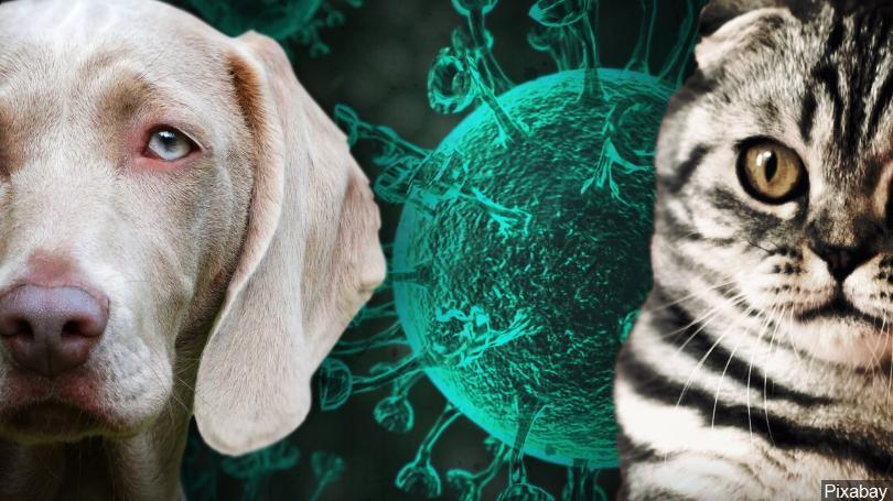 ¿Puede contagiarme el coronavirus mi perro o mi gato?